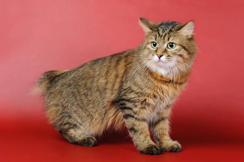 Nevjerojatne mačkice
