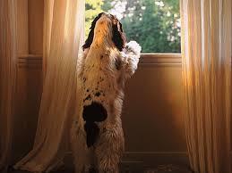 Apa yang harus dilakukan untuk tidak melolong anjing  Anjing