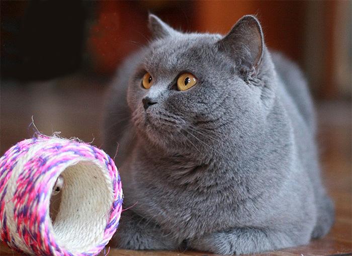 krémová kočička stříkat