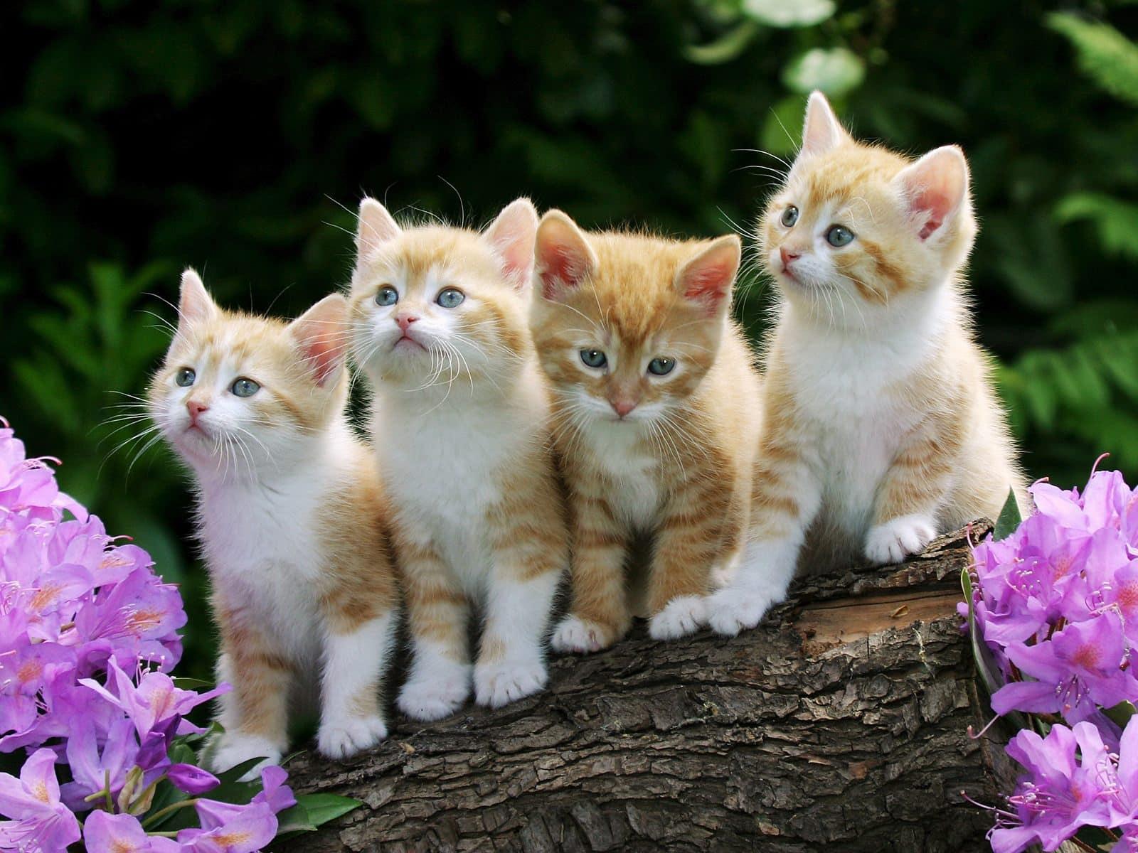 Γάτα άτομο ραντεβού ιστοσελίδα