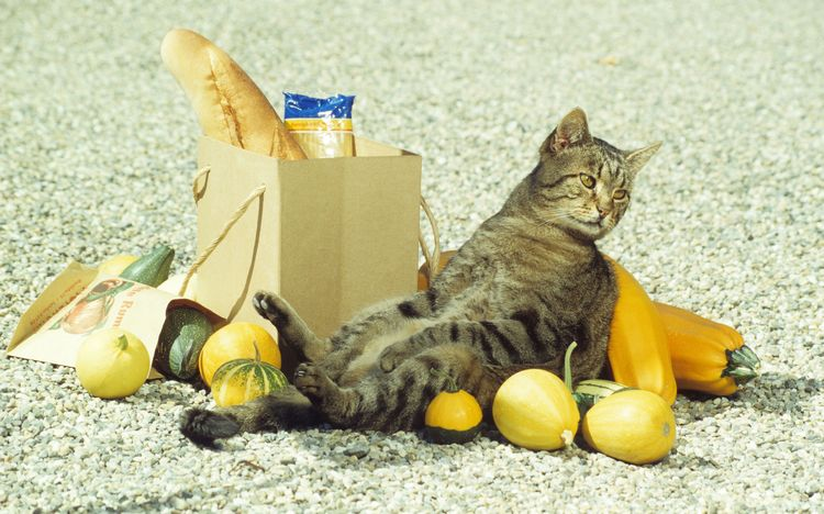 Кот дергает хвостом почему