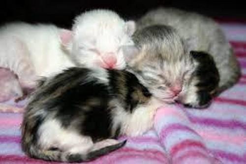 Zdarma dospívající kočička obrázek