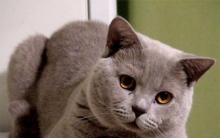 06784cabd91d Τι να δώσει η γάτα όταν ρωτάει τη γάτα. Η γάτα ζητάει μια γάτα ...