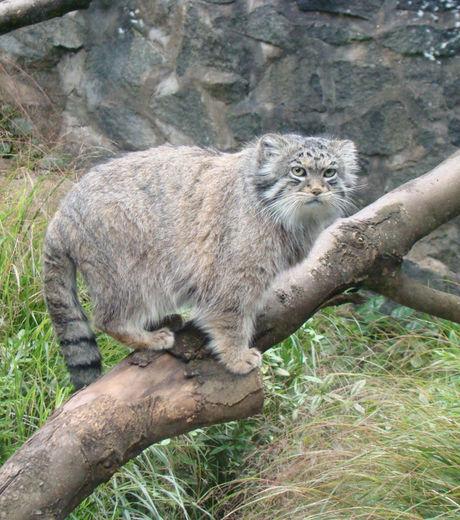Velká kořist tlustá kočička